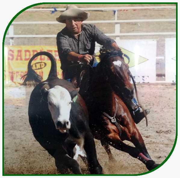 attard stock horse stud