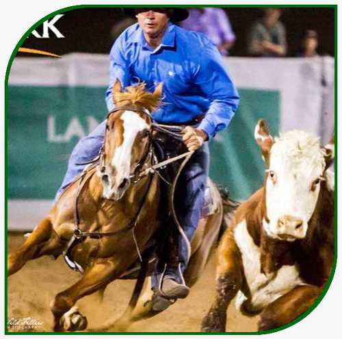 beljay-performance horses