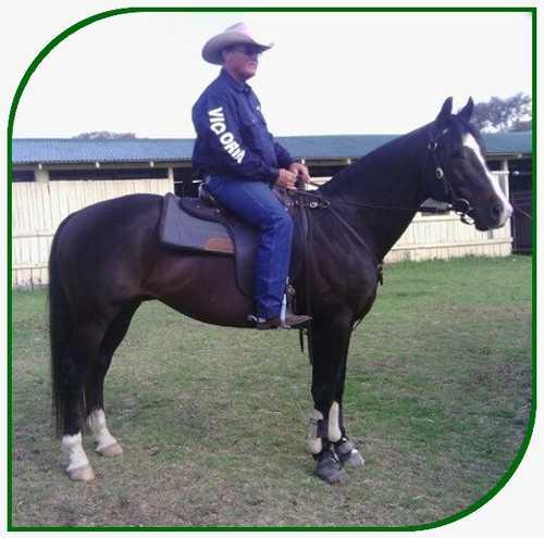 yinbarun stock horse stud