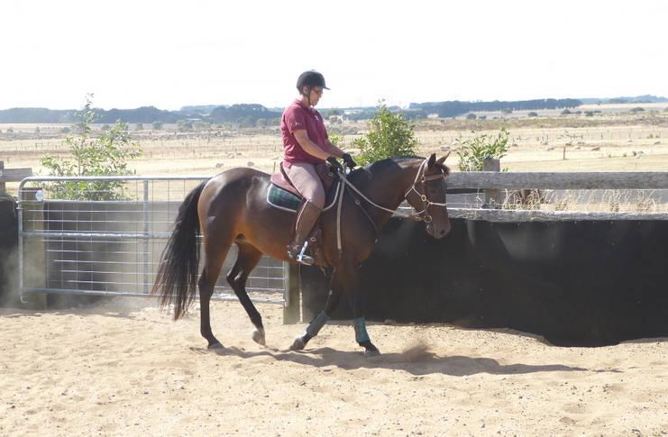 Ramblinvale Susie under saddle traning